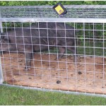 hog trap 150x150 Gates & Panels