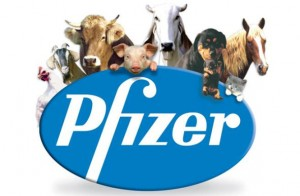 pfizer21 300x196 Tack