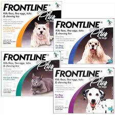 frontline plus Pet