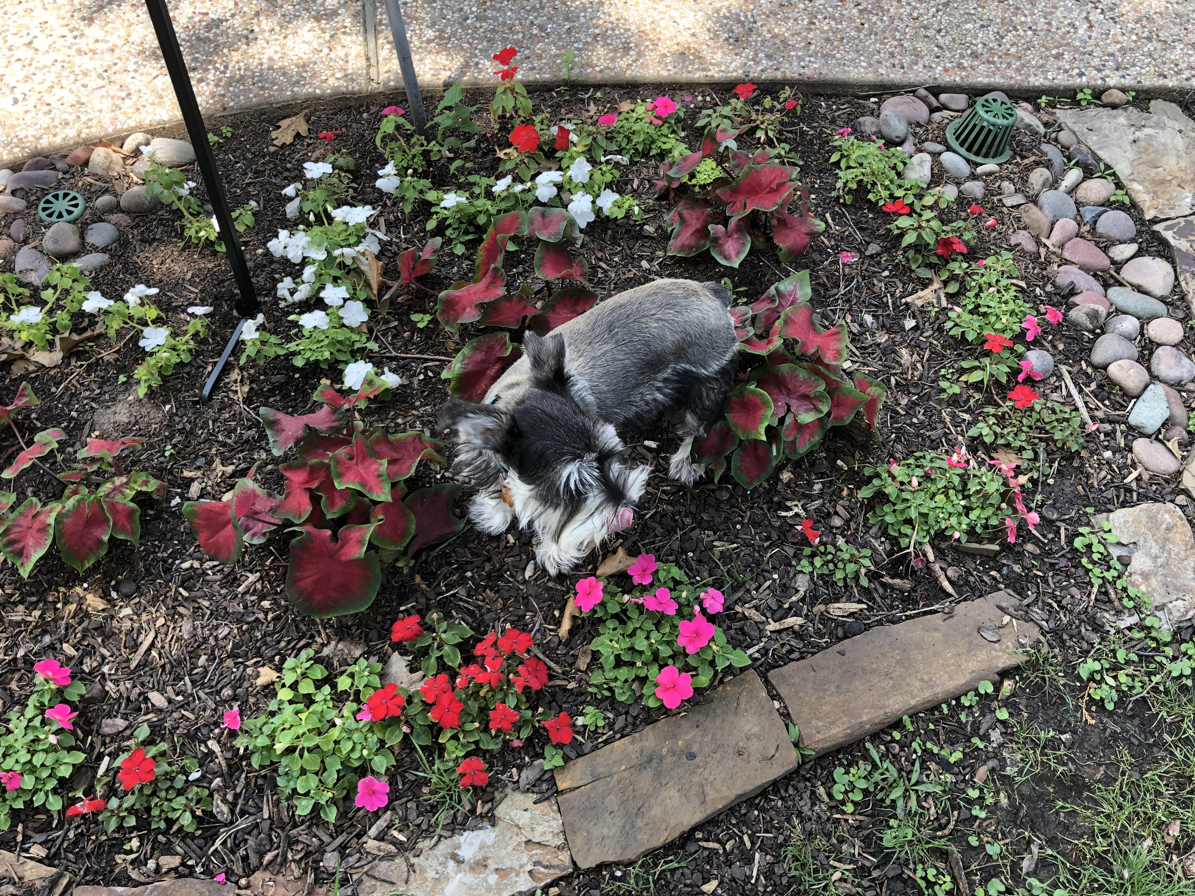 Spring Garden Hazards