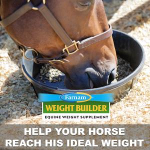 Weight Builder Equine Weight Supplement