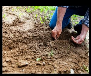 Hand in soil, gardening - read on for august gardening tips