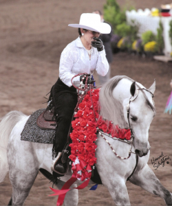 Managing Feeding Programs on the Road for Show Horses: picture is a rider on a white show horse