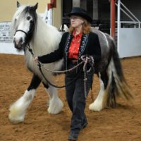 5 yr old Gypsy Vanner Flashy Mare for Sale Black & White. Ground/Haulter. Show Experience. $12k